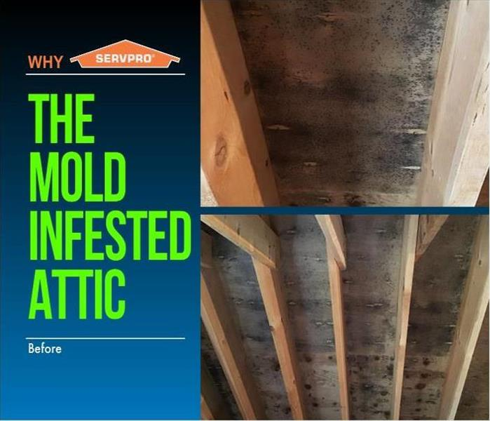 Moldy Attic Before