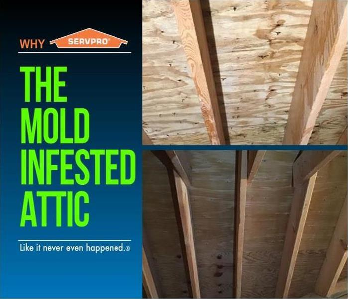 Moldy Attic After