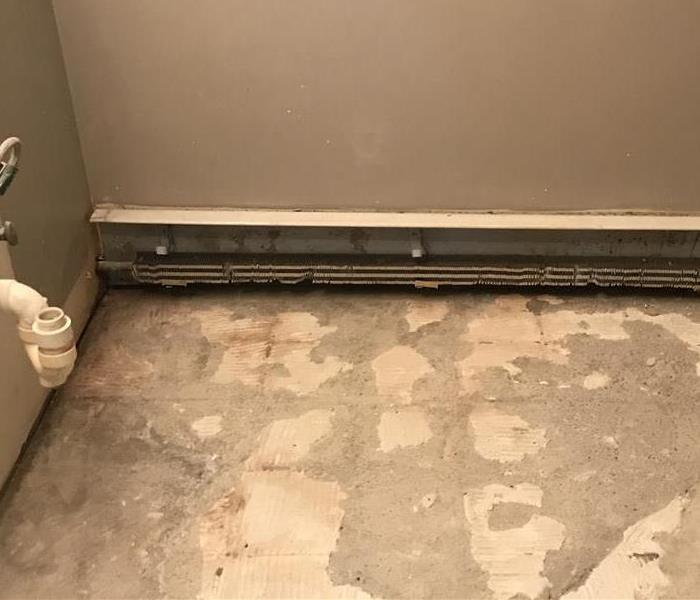 Mold Found Behind Drywall in Basement