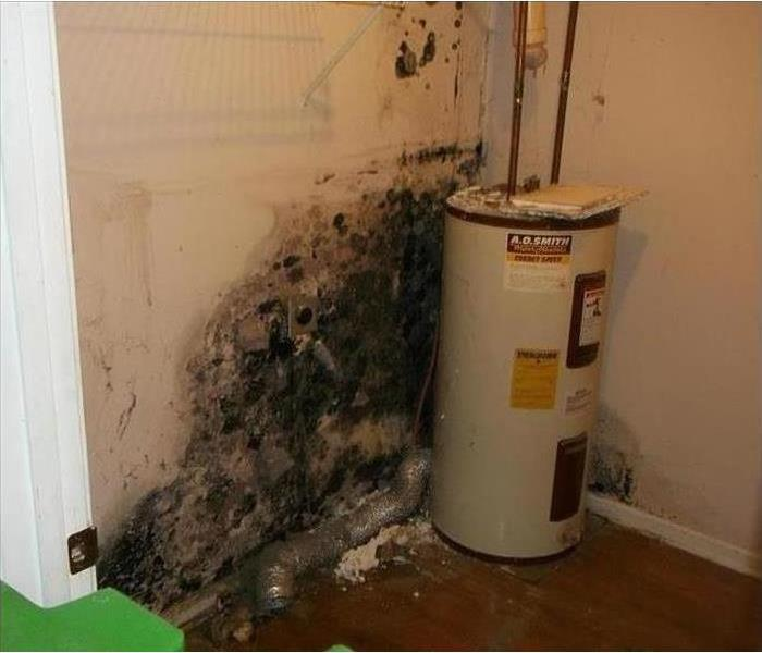 Mold Remediation Mold In The Environment